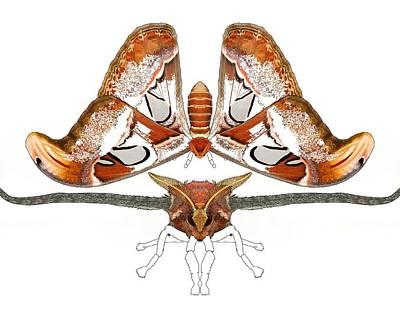 Atlas Moth3 Poster