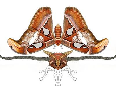 Atlas Moth4 Poster