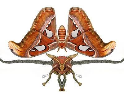 Atlas Moth5 Poster