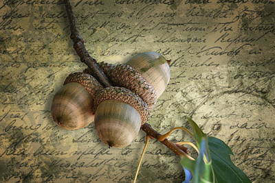 Poster featuring the mixed media Autumn Acorns On Vintage Postcard Digital Art by Debi Dalio