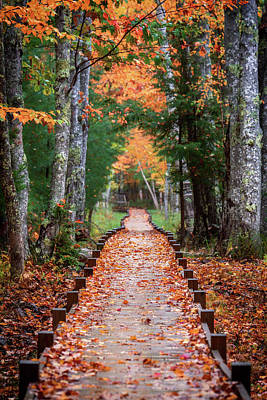 Autumn At Jesup Path Poster