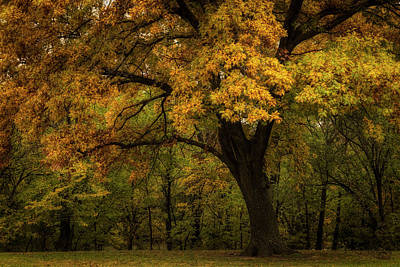 Poster featuring the photograph Autumn Beauty by Scott Bean