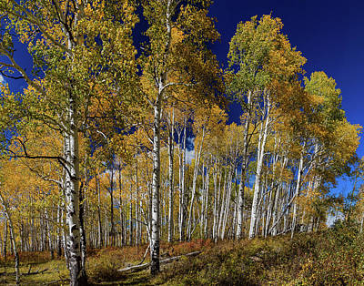 Poster featuring the photograph Autumn Blue Skies by James BO Insogna
