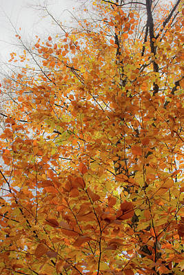Autumn Explosion 1 Poster
