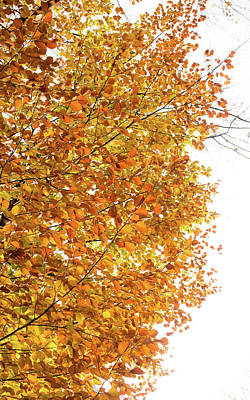 Autumn Explosion 2 Poster