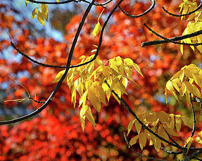 Poster featuring the photograph Autumn Foliage In Bar Harbor, Maine by Bill Swartwout Fine Art Photography