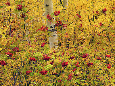 Autumn Forest Colors Poster