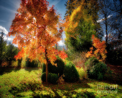 Poster featuring the photograph Autumnal Glory by Edmund Nagele