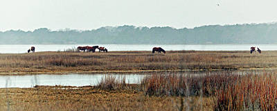 Poster featuring the photograph Band Of Wild Horses At Sinepuxent Bay by Bill Swartwout Fine Art Photography