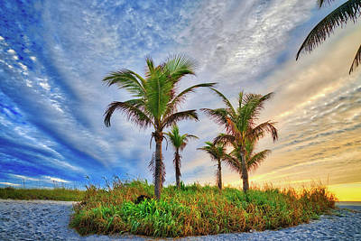 Poster featuring the photograph Beach Sunrise Over The Palms by Lynn Bauer