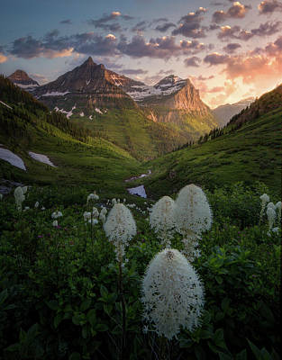 Bear Grass Bloom / Highline Trail, Glacier National Park  Poster