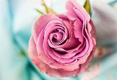 Beautiful Vintage Rose Poster