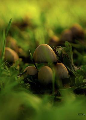 Beauty Of Fungus Poster