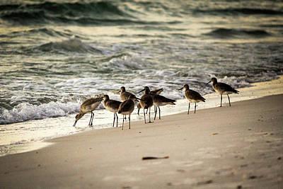 Poster featuring the photograph Birds On The Beach by Doug Camara