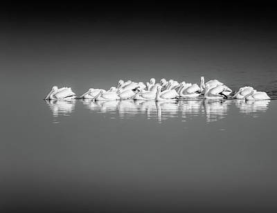 Poster featuring the photograph Black And White Pelican Reflections by Dan Sproul