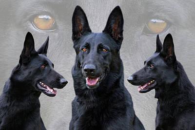 Black German Shepherd Dog Collage Poster