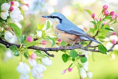 Blue Orange Bird Poster
