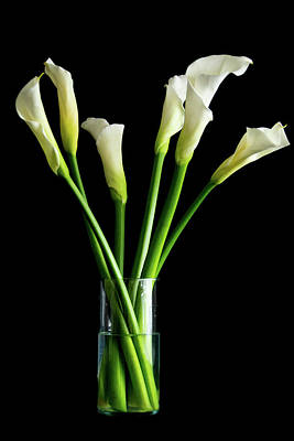 Bouquet Of Calla Lilies Poster