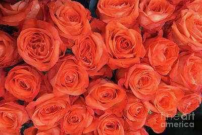 Bouquet Of The  Living Coral Roses Poster