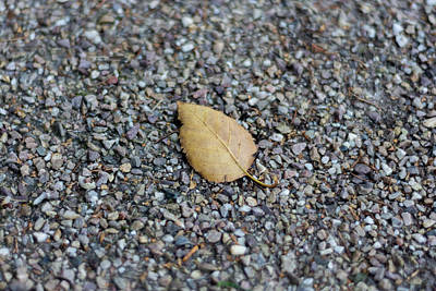 Poster featuring the photograph Brown Leaf On Gravel by Scott Lyons