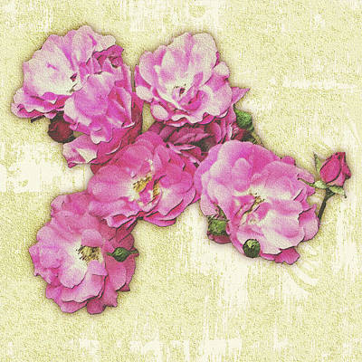 Bush Roses Painted On Sandstone Poster