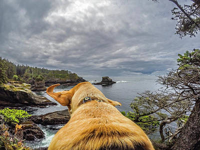 Poster featuring the photograph Cape Flattery By Photo Dog Jackson by Matthew Irvin