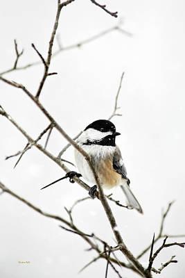 Charming Winter Chickadee Poster