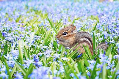 Chipmunk On Flowers Poster