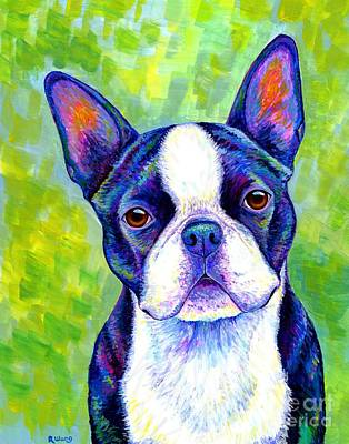 Colorful Boston Terrier Dog Poster