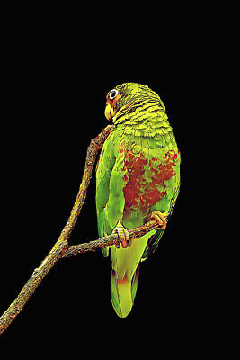 Colorful Parrot Poster