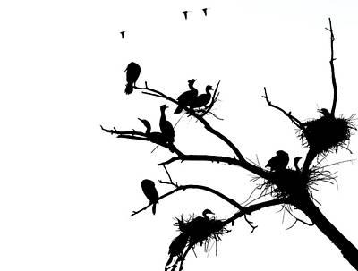 Cormorant's In Silhouette Poster