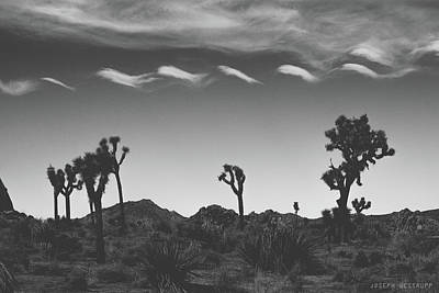 Cotton Sky On Joshua Trees Poster