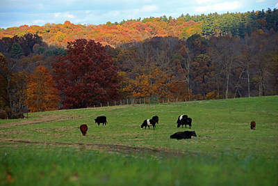 Poster featuring the photograph Cows Grazing On A Fall Day by Angela Murdock