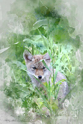 Coyote Pup Poster