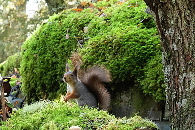 Curious Squirrel Poster
