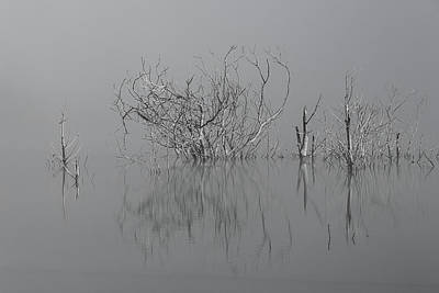 D1093 - Theewaterskloof Trees Poster