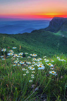 Daisies In The Mountain Poster