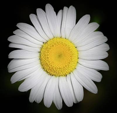 Day's Eye Daisy Poster