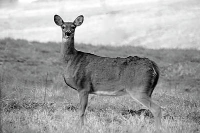 Poster featuring the photograph Deer In Black And White by Angela Murdock