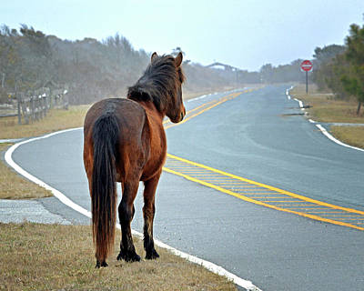 Poster featuring the photograph Delegate's Pride Awaiting Tourists On Assateague Island by Bill Swartwout Fine Art Photography