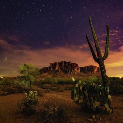 Poster featuring the photograph Desert Beauty by Tassanee Angiolillo