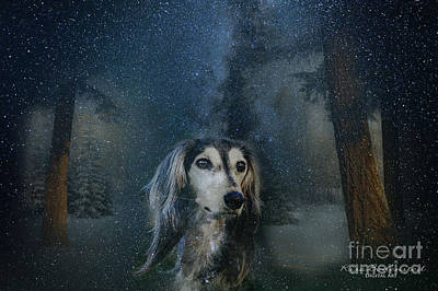 Dog In Winter Poster