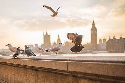 Doves And Seagulls Over The Thames In London Poster