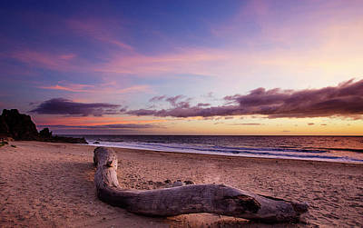 Driftwood At Sunset Poster