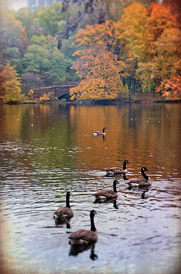 Poster featuring the photograph Ducks In The Muddy River - Olmsted Park  by Joann Vitali