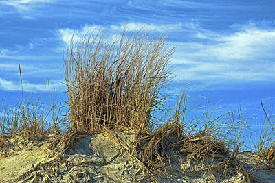 Poster featuring the photograph Dune Grass In The Sky by Bill Swartwout Fine Art Photography