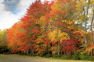 Poster featuring the photograph Fall Colors by Doug Camara