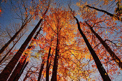 Poster featuring the photograph Fall Trees Sky by Meta Gatschenberger