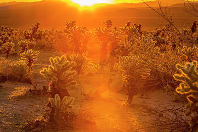 Fiery Sunrise Among The Cacti Poster