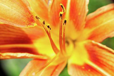 Flower Pollen Poster